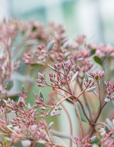 Zarte rosa Blüten im herbstlichen Feeling