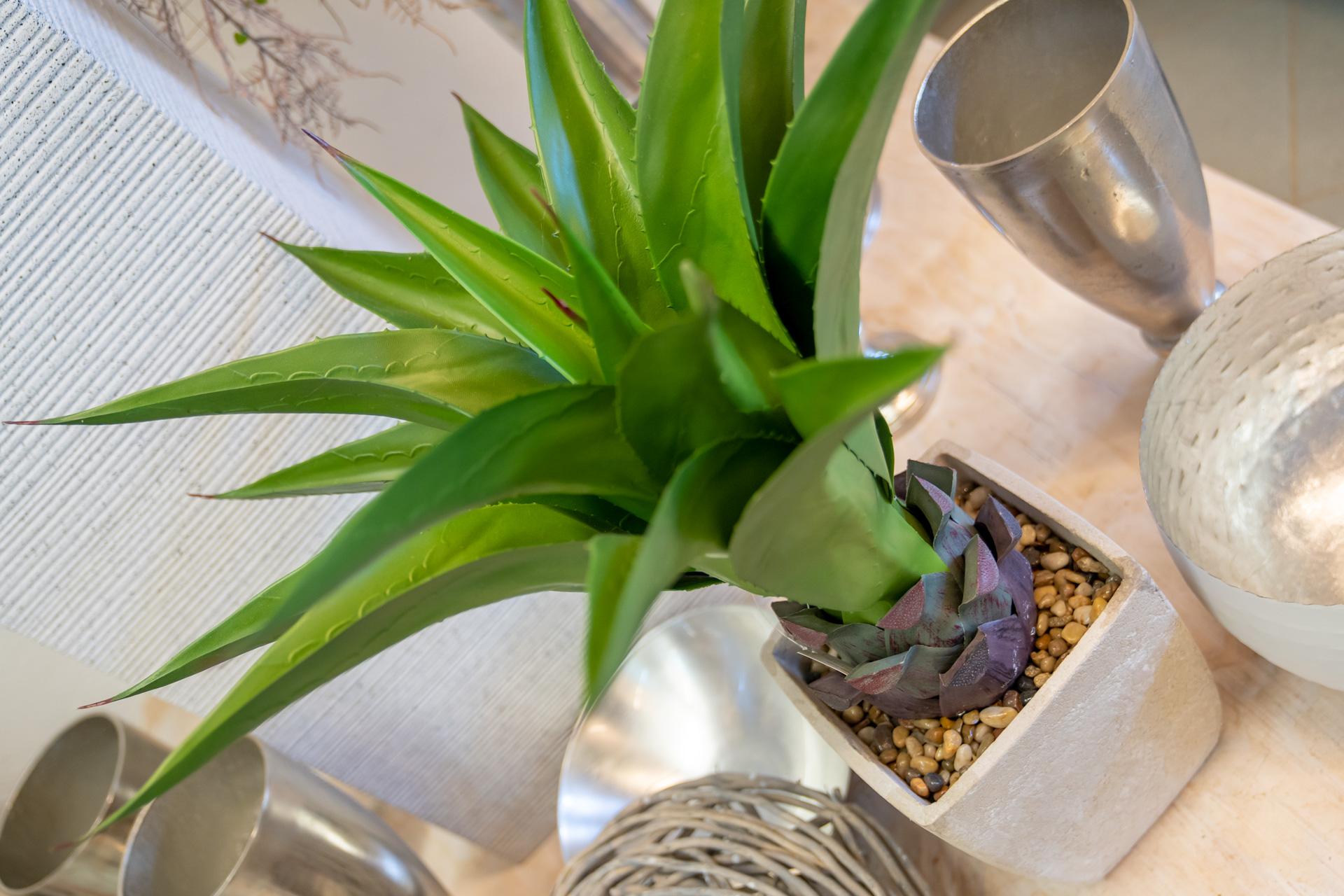 Immergrüne Zimmerpflanzen reinigen die Luft