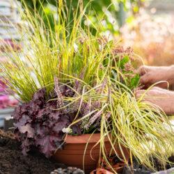 Gartenbaugruppe – Individuelle Bepflanzung