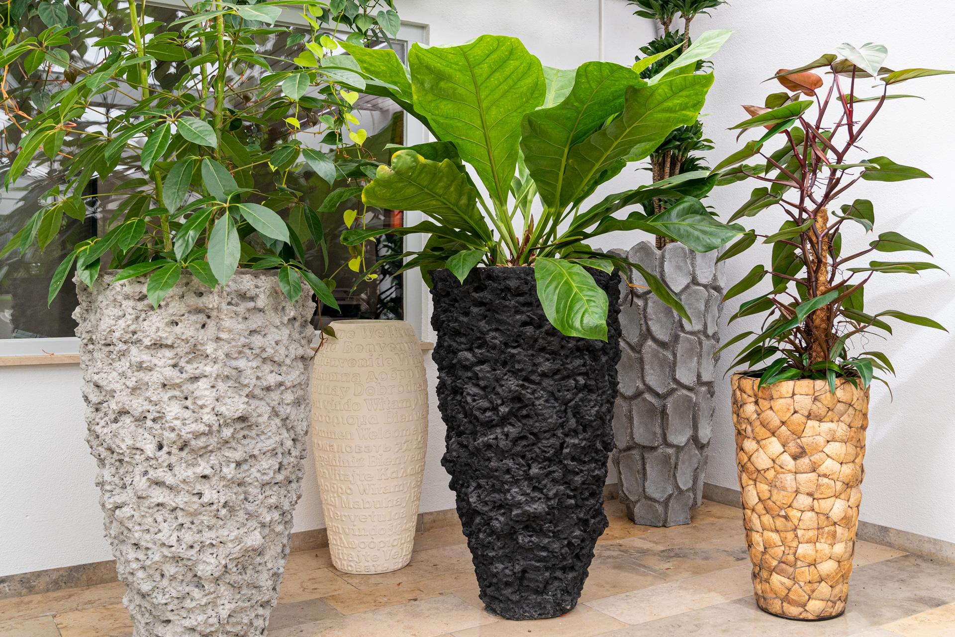 Dekorative große luftreinigende Zimmerpflanzen