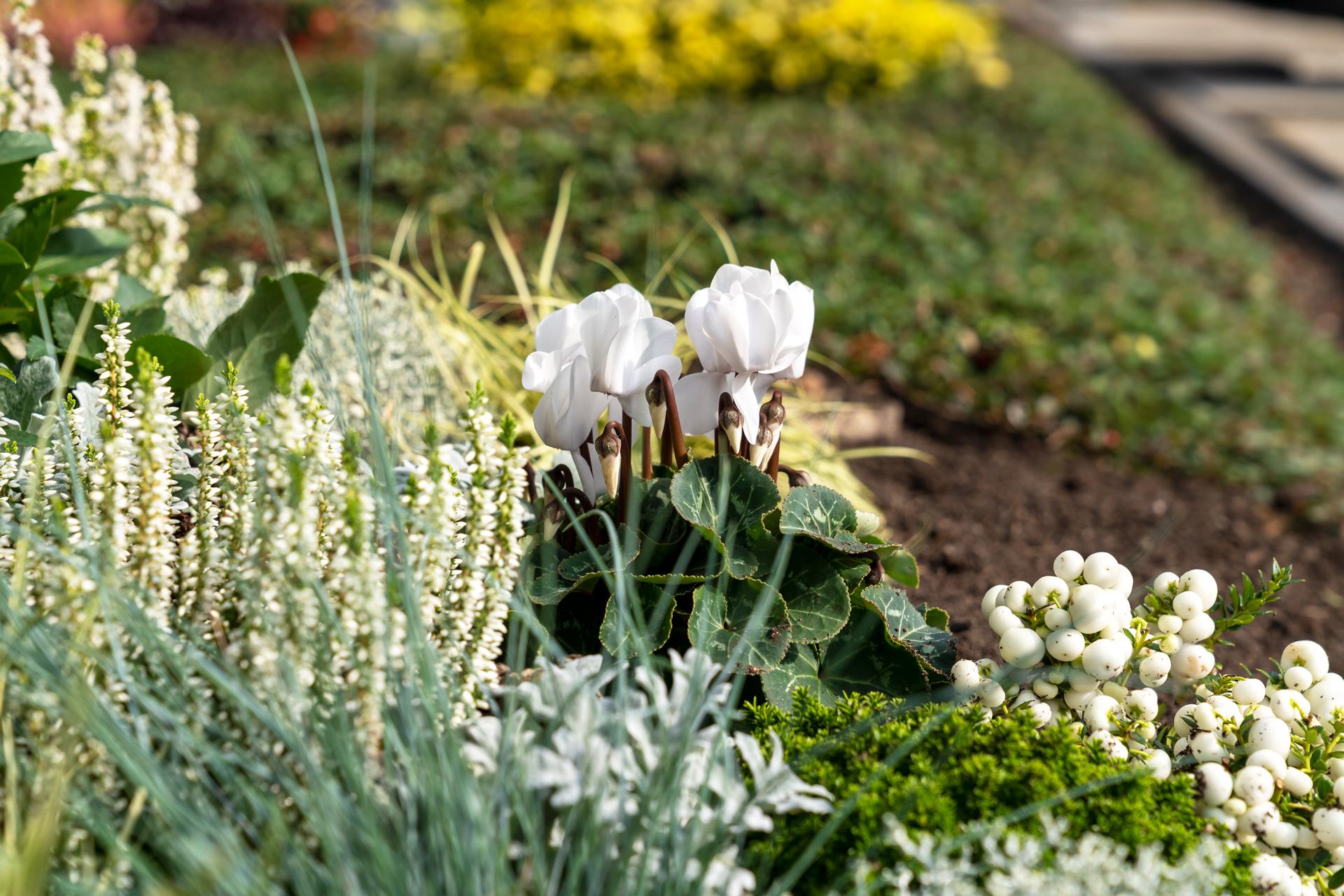 Grabbepflanzung in Silber und Weißtönen