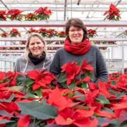 Petra & Kathrin Gammanick mit Weihnachststernen