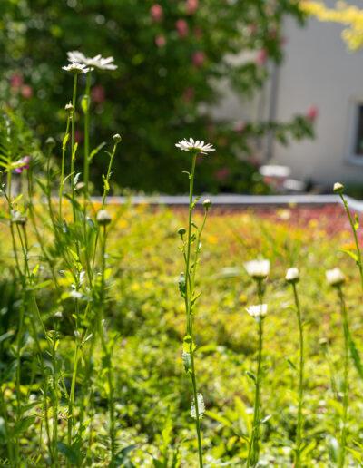 Dachbepflanzungen –Nachhaltige Stadt Begrünung