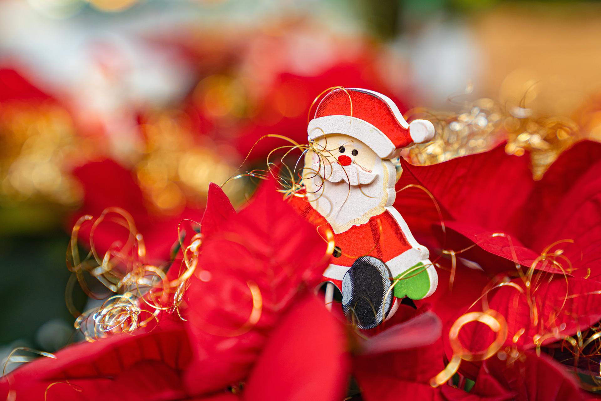 Farbenfrohe Adventsdeko mit Weihnachtsstern
