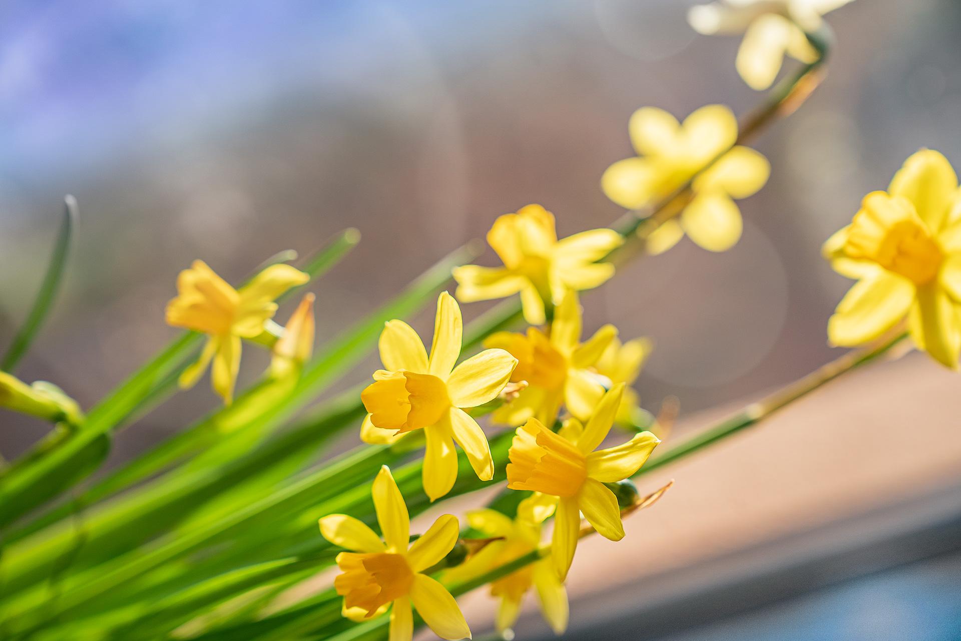 Sonnige Zeiten Für Naturfreunde – Mit Nachhaltigen Pflanzen A