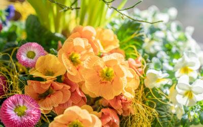 Welche Blumen jetzt pflanzen?