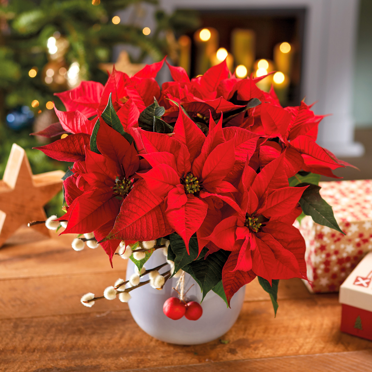 Strauß mit Weihnachtssternen in Rot by Stars for Europe