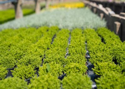 Gärtnerei Carl Pflanzenanbau Grabbepflanzung