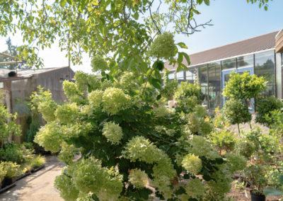Blumen Gärtnerei Carl Garten- & Balkonpflanzen