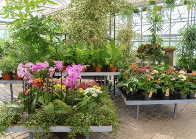 Blumen Gärtnerei Carl Zimmerpflanzen