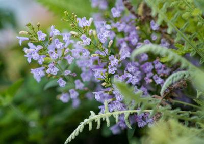 Gärtnerei Böck: Blühende Pflanzenvielfalt für den Sommergarten
