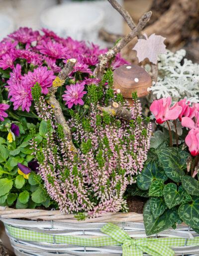 Bepflanzter Korb Blumenhaus Reim