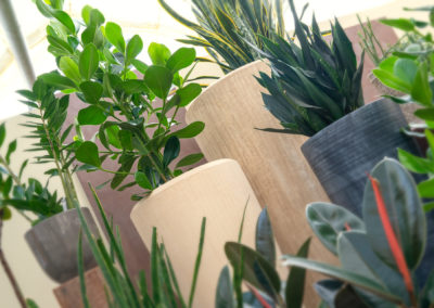 Zimmerpflanzen in edlen Gefäßen