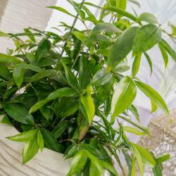 3410 Reim Gruenpflanzen
