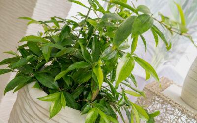 Bessere Luft durch Pflanzen