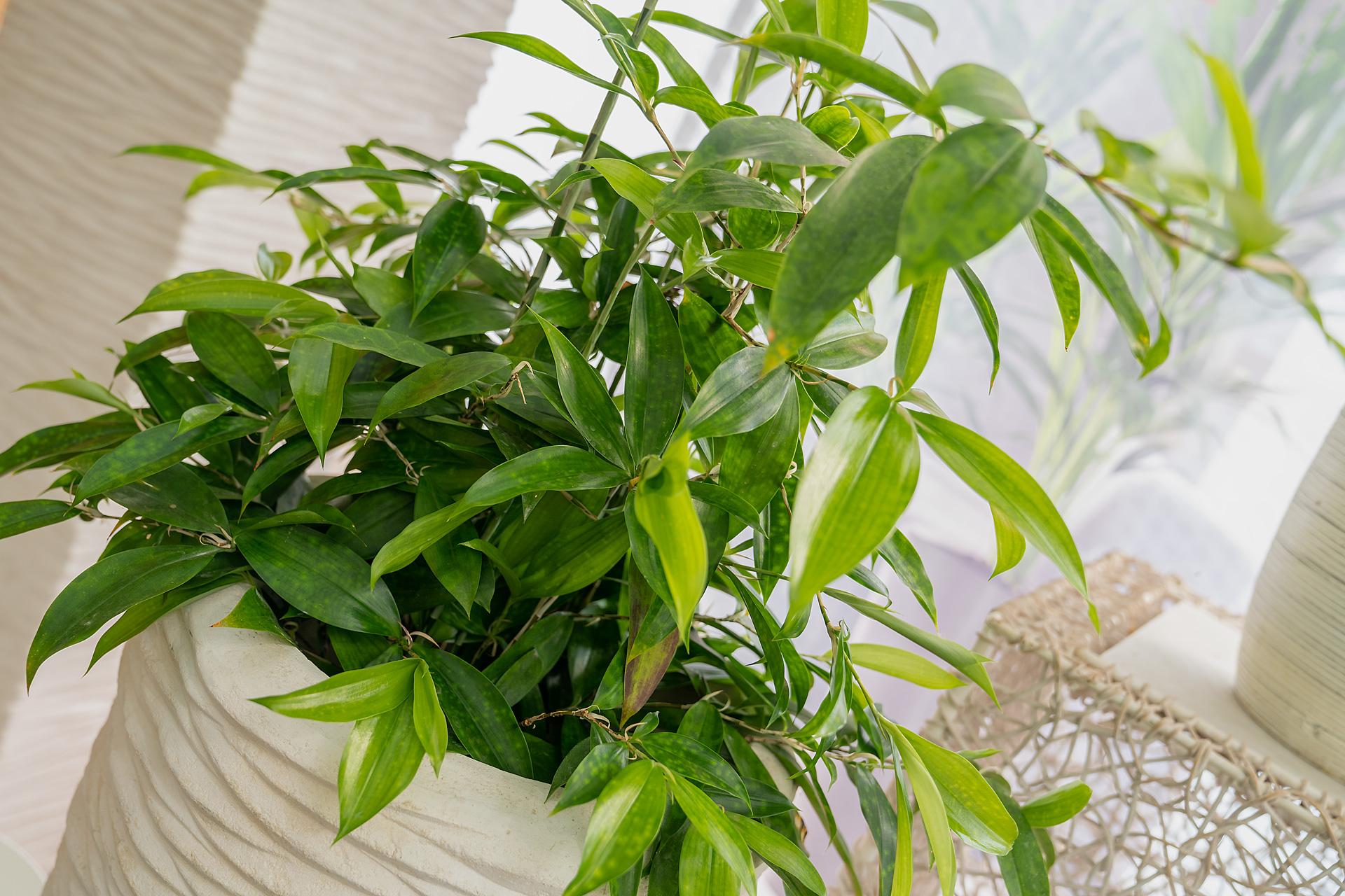 Grünpflanzen aus Ihrer Gärtnerei