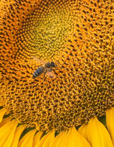 Bienenfreundliche Pflanzen und Umweltschutz