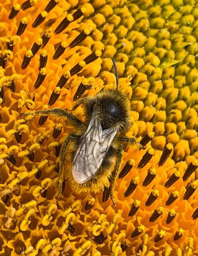 Bienenfreundliche Pflanzen + Umweltschutz