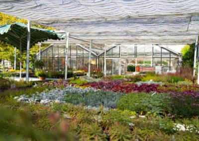 Gärtnerei Elmar Müller Pflanzenvielfalt Für Heim Und Garten