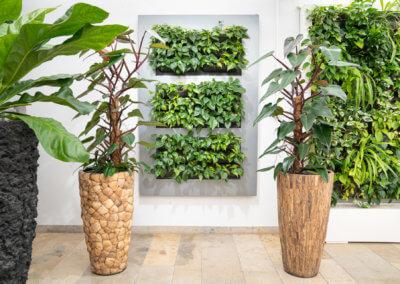 Je grüner, desto besser: Begrünen Sie Wand und Raum