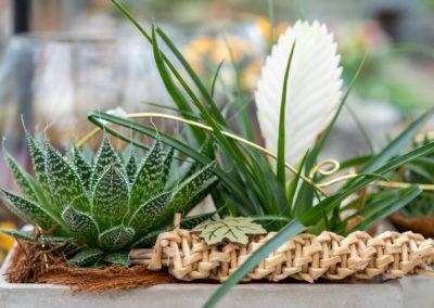 Gärtnerei Schunke – Gefäß Zimmerpflanzen