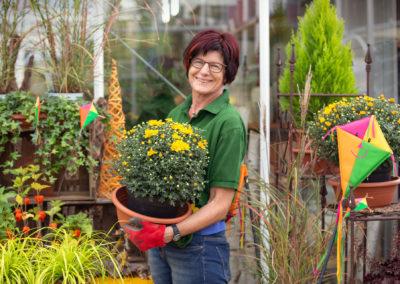 Gärtnerei Gammanick: Chrysanthemen