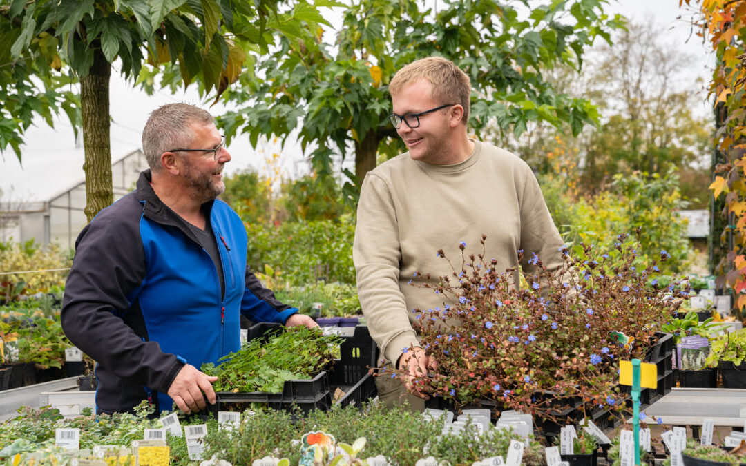 Gartenbaumschule Ringelmann Pflanzenvielfalt Stauden