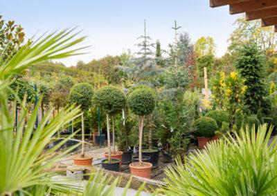 Gartenbaumschule Ringelmann Pflanzenvielfalt
