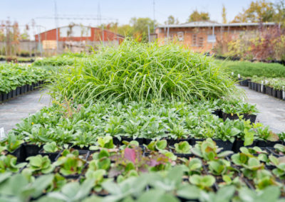Gartenbaumschule Ringelmann Pflanzenproduktion