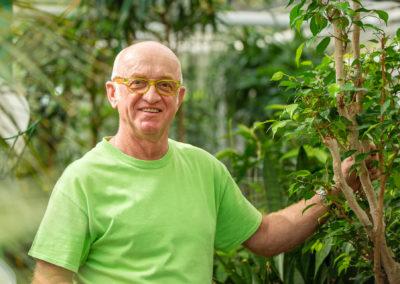 Grünpflanzen Für Innen Vom Profi