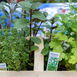Gartenbaugruppe Würzburg –Leckere Vielfalt - das Original