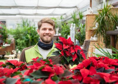 Gärtnerei Hupp Weihnachtssterne Adventszeit