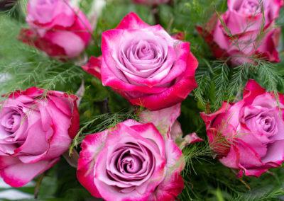 Gärtnerei Hupp Schnittblumen Rosen