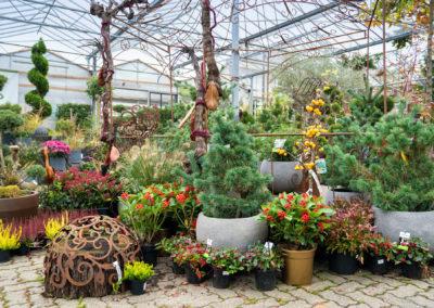 Gärtnerei Hupp Vielfalt Gartenbepflanzung