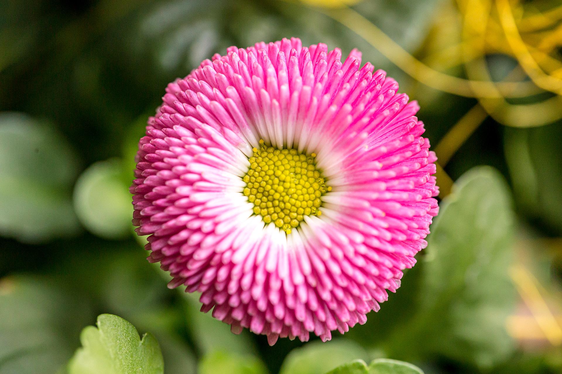 Nachhaltig In Der Region Angebaute Qualitätspflanzen Aus Ihrer