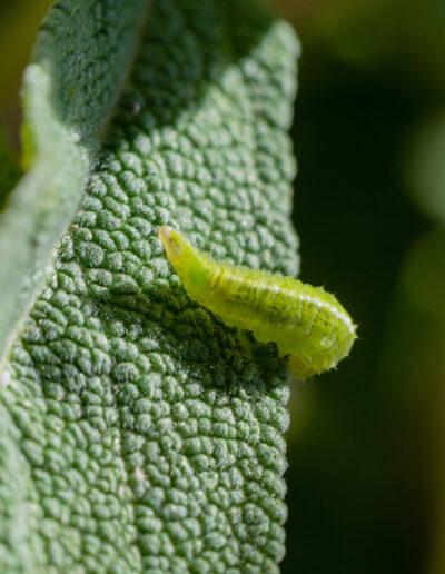 Nützlinge Natürliche Schädlingsbekämpfung im Garten