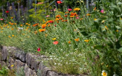 Pflegeleichter Garten mit Stauden