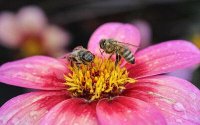 Insekten zählen, warum? Im doppelten Sinne …